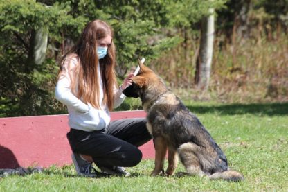 LEVEL 1 OBEDIENCE: Puppy/Small Dog Beginners - Set of 7 Group Lessons - Prince George 11 LEVEL 1 OBEDIENCE: Puppy/Small Dog Beginners - Set of 7 Group Lessons - Prince George