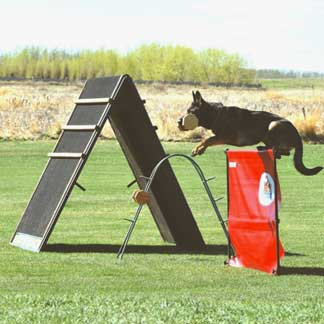 Dog Training hurdles
