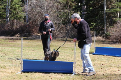 LEVEL 2 OBEDIENCE: Advanced Training - Set of 7 Group Lessons - Prince George 7 LEVEL 2 OBEDIENCE: Advanced Training - Set of 7 Group Lessons - Prince George