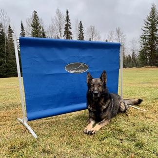 Dog Training High Jump and Hurdle